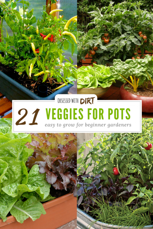 Many vegetables and fruits will produce more, grow faster and have less pests and diseases when grown in a container. Growing fruits and vegetables in containers is super easy for beginner gardeners and backyard gardeners too. Check out our guide to the 21 best container gardening vegetables here. #growyourownfood #thehappygardeninglife #homegarden #urbanfarming