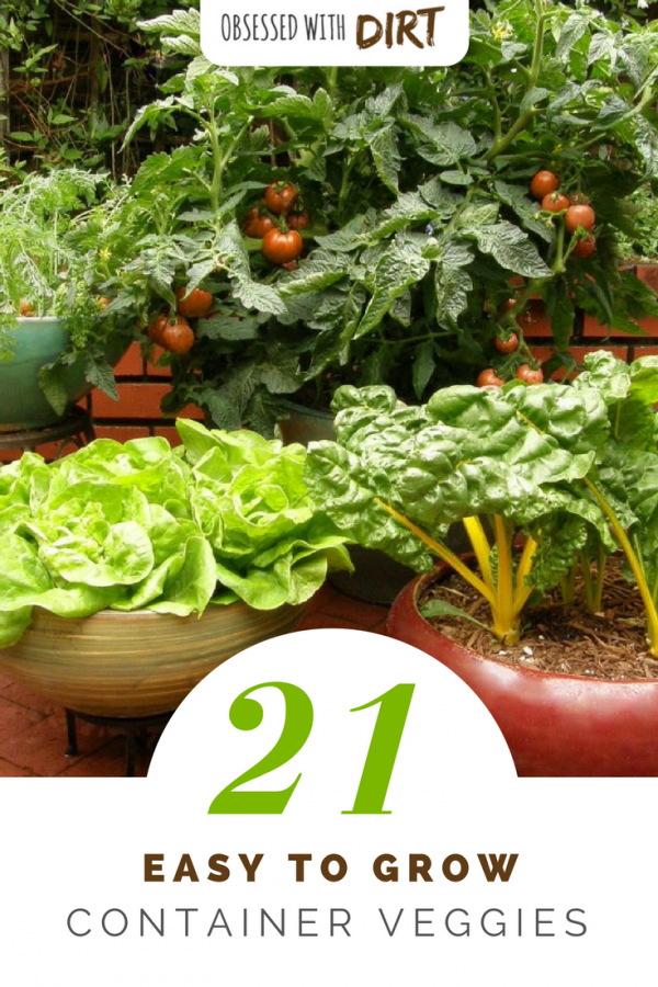 Many vegetables and fruits will produce more, grow faster and have less pests and diseases when grown in a container. Growing fruits and vegetables in containers is super easy for beginner gardeners and backyard gardeners too. Check out our guide to the 21 best container gardening vegetables here.