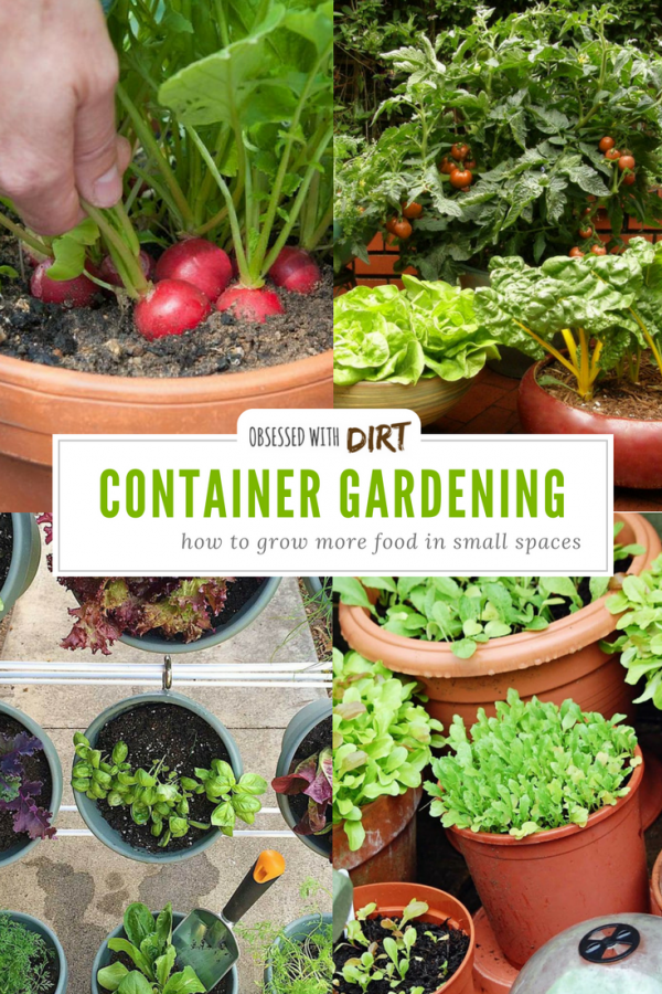 Container vegetable gardens can have higher yields than your average vegetable garden. Growing your vegetables in containers is easy and efficient too, you'll learn how to grow vegetables easily and get the best use out of your space. #thehappygardeninglife #growyourown #greenthumb #homegarden