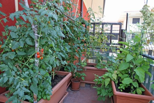 Container Vegetable Garden Layout