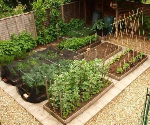 Vegetable Garden Design Ideas: Free Vegetable Garden Layout, Plans And Planting Guides
