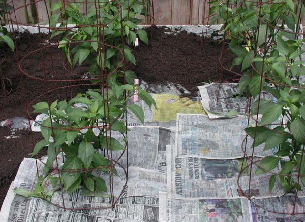 Newspaper Weed Control