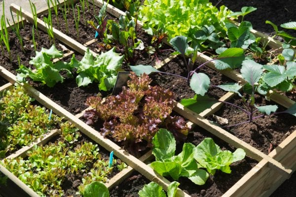 12 Ways To Grow A Successful Vegetable Garden Inc Best Layouts