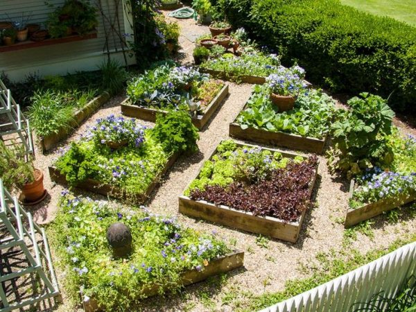 Vegetable Garden Design: How To Plant Your Veggie Patch