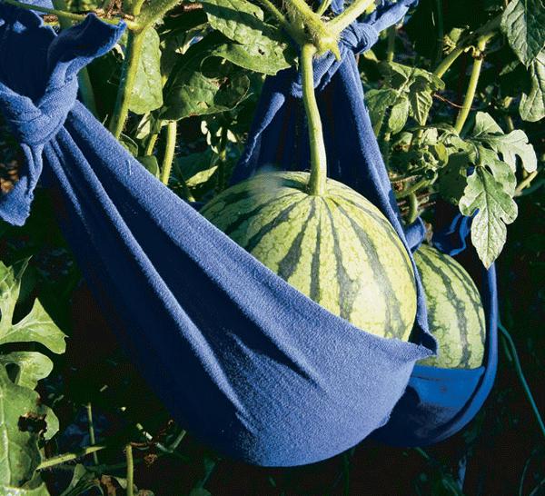 Melon Hammock