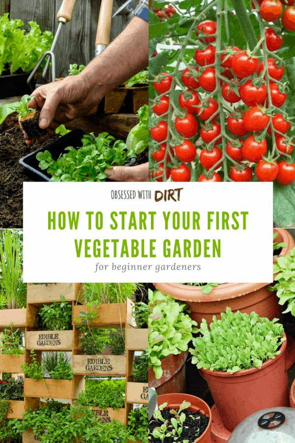 I love this beginner vegetable gardening guide. Absolutely everything is covered from choosing the best location to planting your first crop. You'll learn how to select the best vegetable garden site, when and how to grow vegetables and how to improve your soil for the best harvests. Find out everything you need to know. #thehappygardeninglife #growyourownfood #vegetablegarden #homegarden