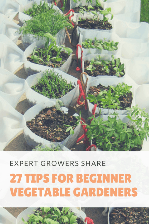 When you first get into vegetable gardening there's a lot of things to learn. It's a steep learning curve for many new gardeners. That's why we've created this big list of tips for vegetable gardening for beginners. You'll learn all those little things that come with experience. Things like keeping detailed records of your crops and labeling plants so you know who's who when it comes to harvest time. So what are you waiting for? It's time to get diggin'#growyourownfood #thehappygardeninglife #homegarden #urbanfarming