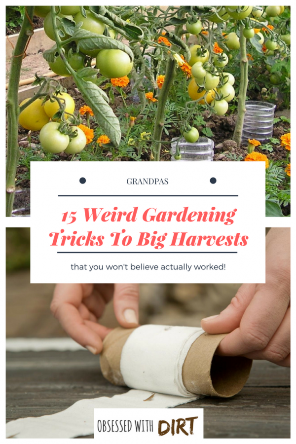 Ok so some of these are pretty out there. Who would have thought of using baby diapers in your vegetable garden? There's 19 other whacky vegetable gardening tips here too. Let me know what you think. #growsomethinggreen #organicgardening #growyourownfood #thehappygardeninglife