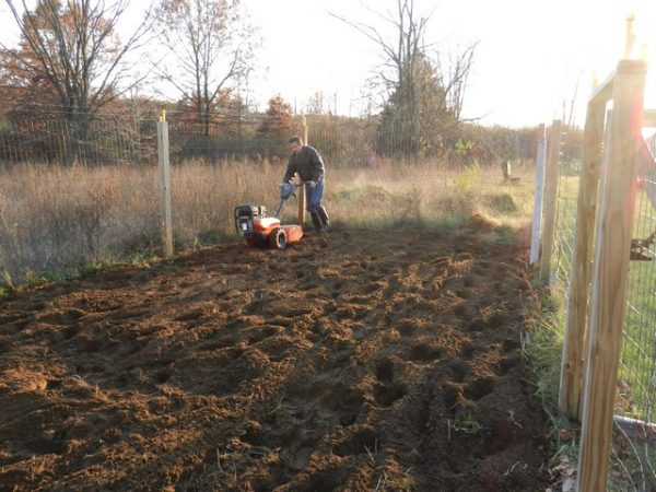 Compacting Your Soil in veggie gardens