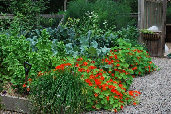 flower and herb gardens