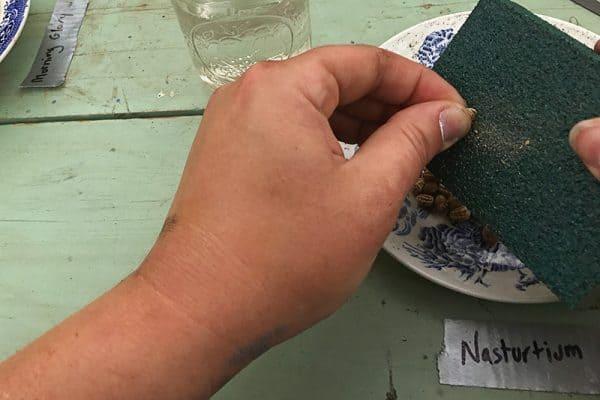 Scarify Seeds