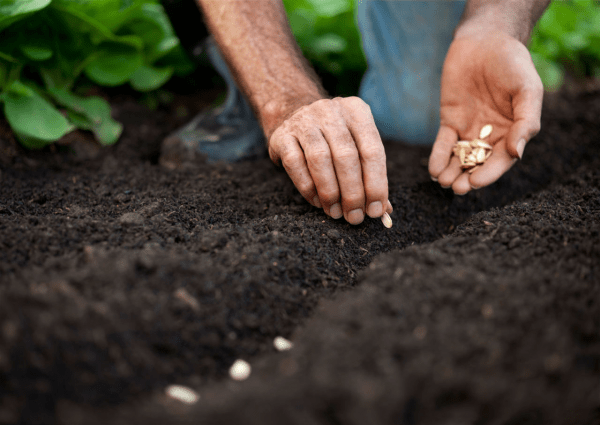 vegetable gardening - test your soil
