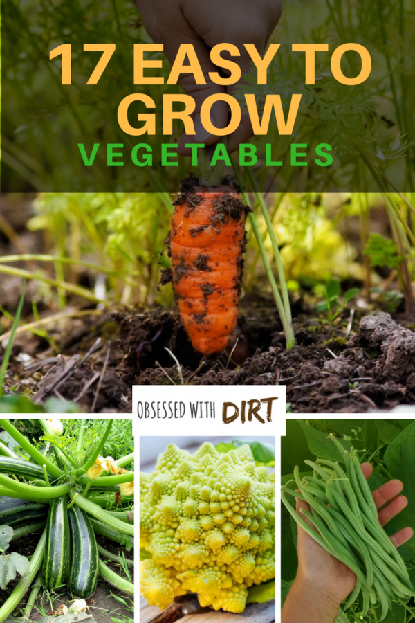 There is something thoroughly satisfying about easy to grow vegetables. For most people growing a vegetable garden may seem like a daunting task. We have assembled a list of fool proof vegetable garden plants that are easy to grow for beginners and do not require much time or effort. #urbanorganicgardener #growsomethinggreen #growyourownfood #homegrown