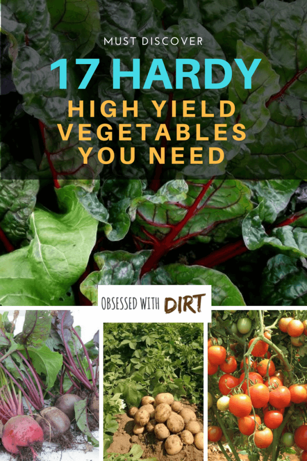 High yield vegetables are great for gardeners with small spaces. Gracing your dinner table with the produce from your own garden definitely enhances the flavor of food. It gives you a sense of pride, contentment, and joy. #thehappygardeninglife #homegarden #growyourown #growsomethinggreen