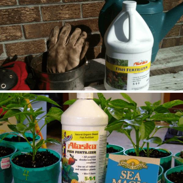 5 Of The World's Best Homemade Vegetable Garden Fertilizers