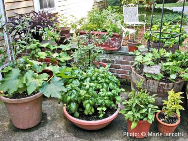 Crafty Container Vegetable Gardening Design Ideas And Tips