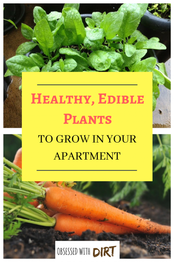 healty edible plants to grow in your apartment
