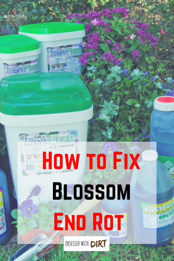 fix blossom end rot