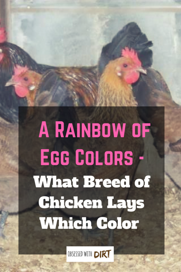 a rainbow of egg colors