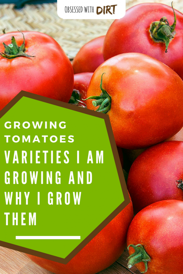 tomato varities and why I grow them