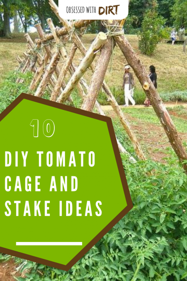DIY Tomato Cages and Stake Ideas for Tomatoes