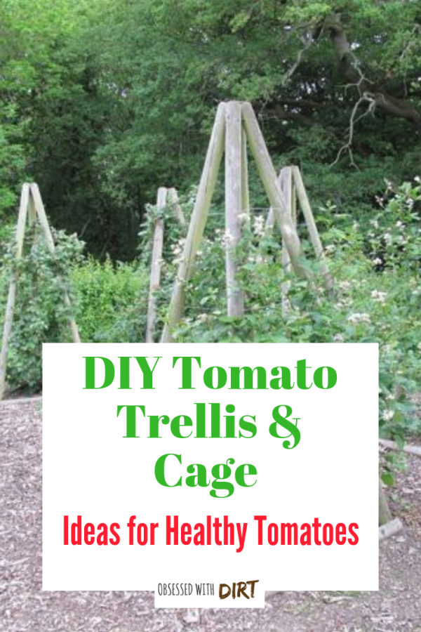 10 Cheap And Easy Diy Tomato Cages Gardeners Magazine