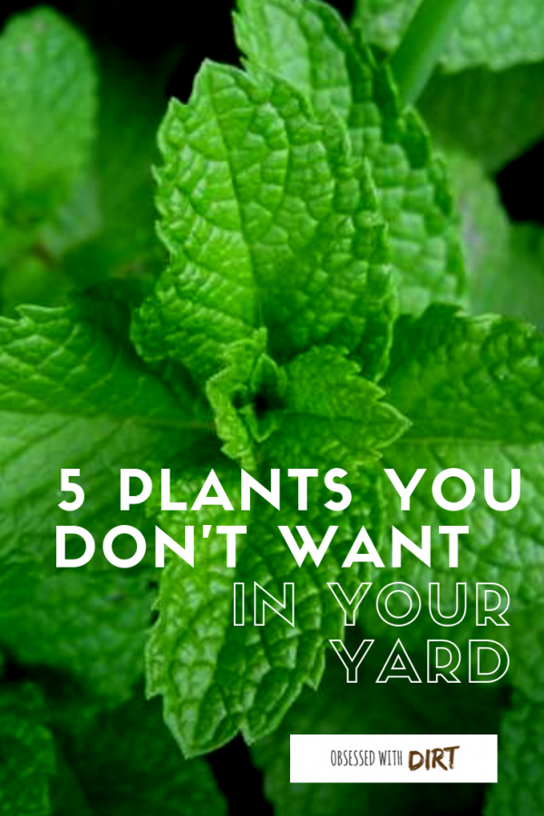 plants you don't want in your yard